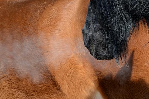 artborghi-horse-bits-3small