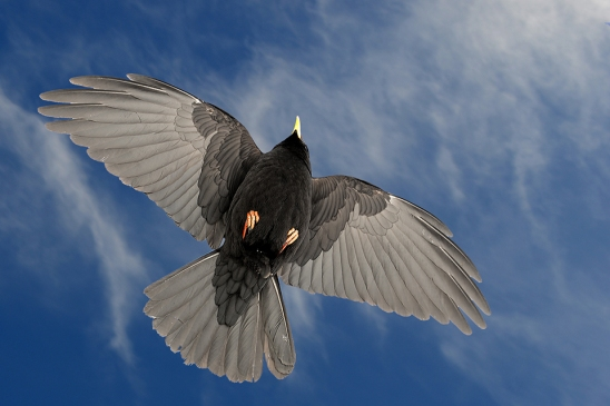 crow-santis_artborghi_2small