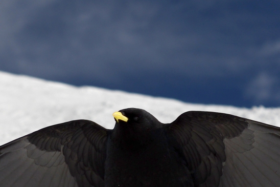 crow-santis_artborghi_3small
