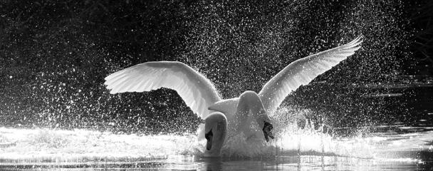 artborghi-bird-love-2full