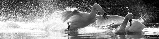 artborghi-bird-love-3small