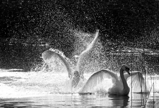 artborghi-bird-love-5full