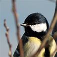 artborghi-birds-1dsmall