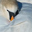 artborghi-birds-4dsmall