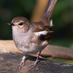 artborghi-birds-small-1