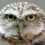artborghi-birds-small-11
