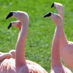 artborghi-birds-small-12