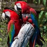 artborghi-birds-small-2