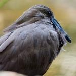 artborghi-birds-small-4