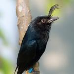 artborghi-birds-small-5