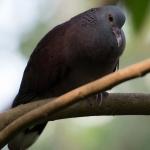artborghi-birds-small-8
