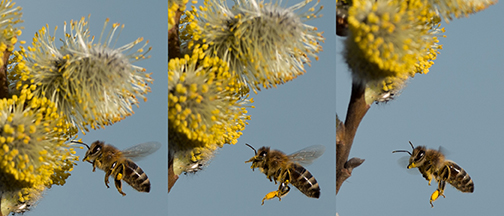 bees1small