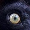 occhi copy 14