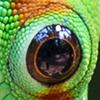 occhi copy 15
