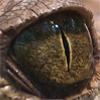 occhi copy 16