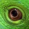 occhi copy 5