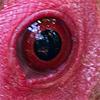 occhi copy 6