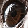 occhi copy 7