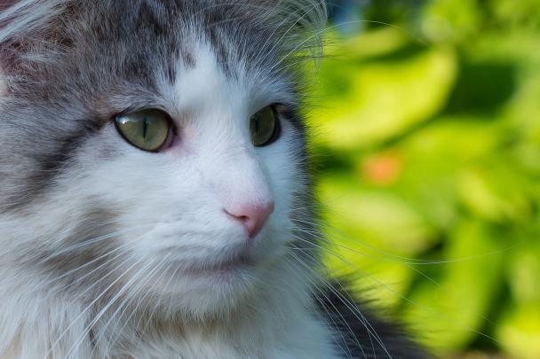 artborghi-cat-1