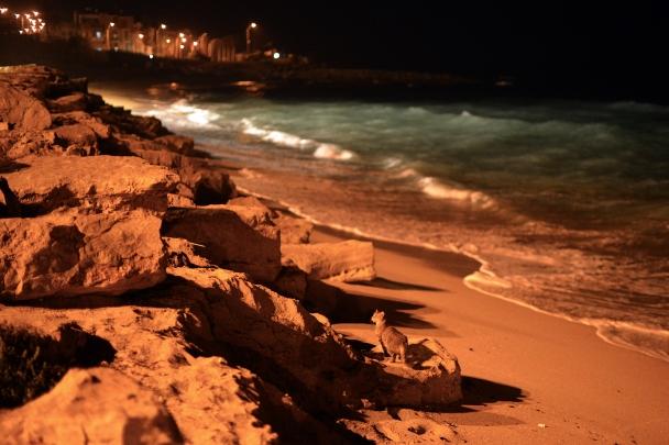 haifa-freetime-artborghi-18