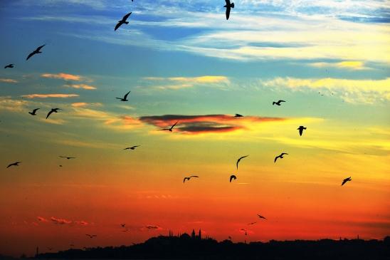 artborghi-istanbul-goodbye-10