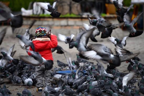 bosporus-birds-artborghi-7