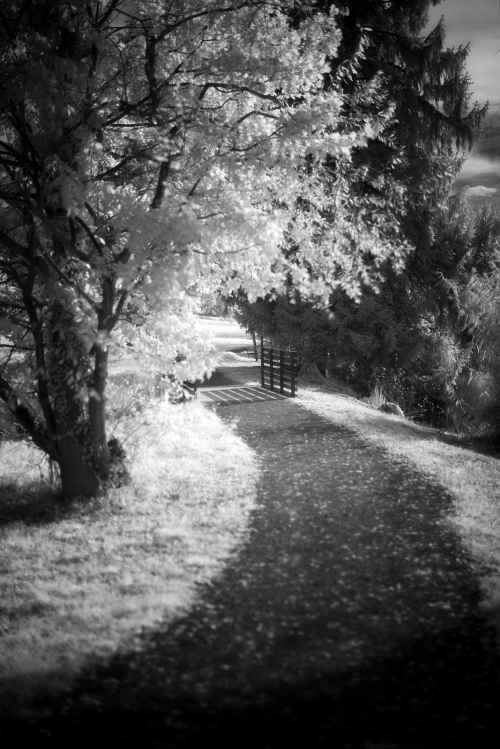 d800 infrared autumn artborghi 5