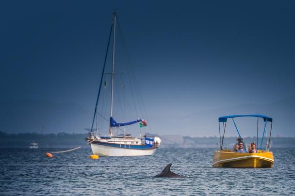 Dolphin watchers, Mare Morto, Cabras
